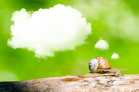 Daydreaming snail on a branch in the forest