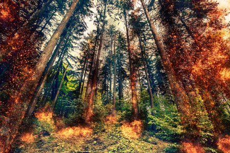 inferno: Fire inferno in a green forest at daytime