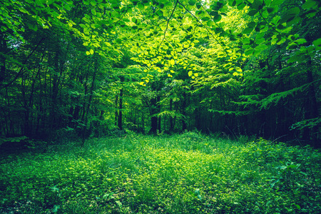 Green leaves in a forest clearing in the spring Standard-Bild