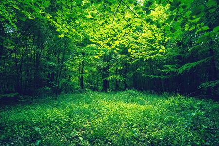 Groene bladeren in een bos clearing in het voorjaar