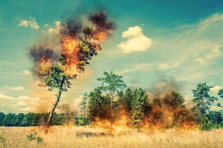 firestorm: Tree on fire on a dry field in the summer