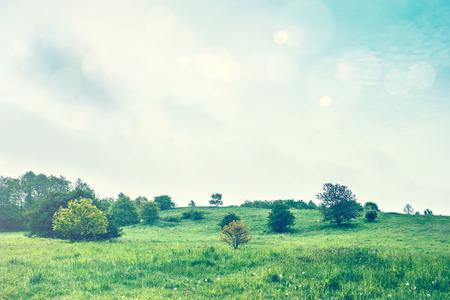 greem: Greem meadow in the springtime with bright bokeh sky