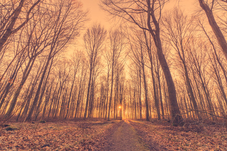 tress: Tall tress by the road in a forest sunrise in march