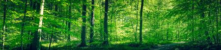 緑の色で春の森 写真素材