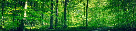 Forest in the spring in green colors Stok Fotoğraf