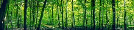 Trail in a green forest panorama landscape in the spring Imagens