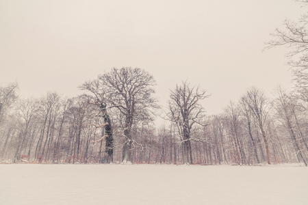 frostbitten: Trees in a winter landscape with snow