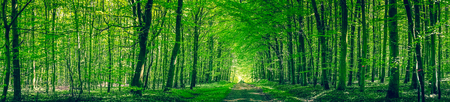 Panorama scenery with a road in a green forest Stockfoto