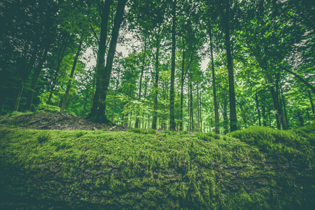 appalachian trail: Moss on a wooden log in a green forest in the spring Stock Photo