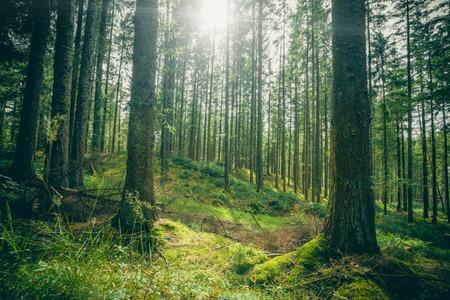 La tala de bosques en un bosque verde en la primavera