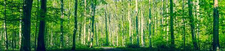 春のパノラマ風景で緑の木々 とデンマークの森 写真素材