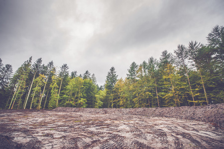 cleared: Colorful trees around a cleared area in a forest Stock Photo