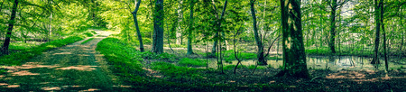 Swamp area in a green forest panorama scenery Stock Photo