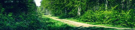 Panorama landscape in a danish forest in the spring Stock Photo