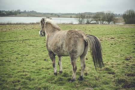 Horse taking a dump on a green field by a lake in a rural environment