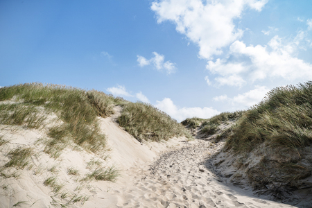 Dune on a beach with lyme grass in the summer in sunlight with blue sky Stock Photo