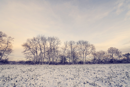 Winter landscape with barenaked trees in the morning sunrise with snow on a rural field