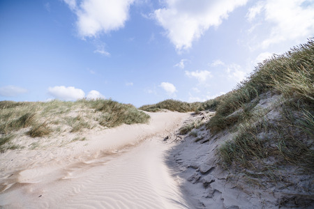 Trail on a Scandinavian beach with lyme grass in the summer under a blue sky with white clouds