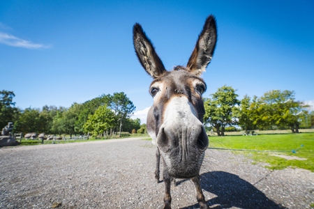 Funny donkey close-up standing on a road in a rural environment 版權商用圖片