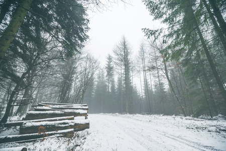 Woodpile in a misty forest with snow on the ground in the winter