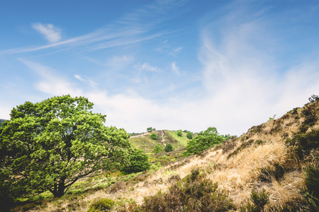 Green trees on a hill side in the summer with blue sky and dry grass