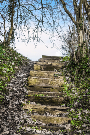 Wooden stairs in a forest with green ivy leading to a blue sky in heaven