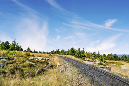 Railroad tracks in a dry nature landscape with green pine trees in the summer