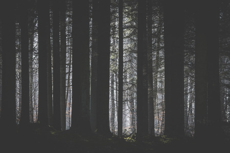 Dark forest with a clearing lighten up by the sun with tree silhouttes in the foreground Stok Fotoğraf