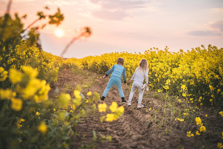 Kids playing in a canola field in their pyjamas with yellow flower all around in the sunset Stok Fotoğraf