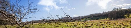 Large branch on a green meadow in a panorama landscape under a blue sky 免版税图像