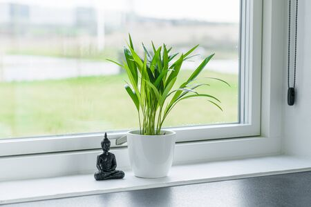 Green plant with a Buddha figure in a window in a bright environment