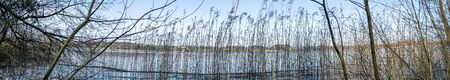 Panorama scenery with rushes by the shore of a lake in the autumn 免版税图像