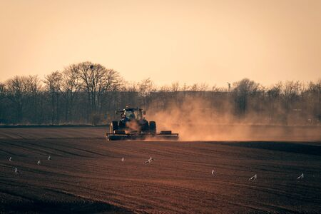 Tractor on a field in the sun with dust flying in the air and gulls all around