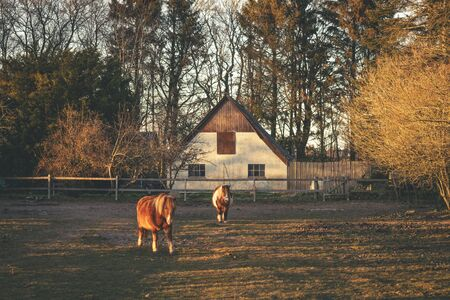Horses outside a farm on a fenced field in the sunset with sunlight at dawn