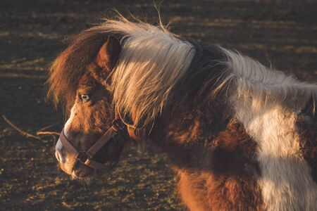 Horse in the autumn sun on a field at dawn with a special eye 版權商用圖片