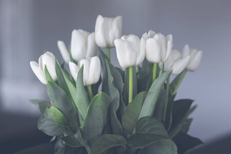 White tulips flowers on green stalks in an indoor ornament in soft colors