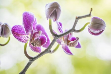 Purple orchid flowers on a fresh green Banco de Imagens