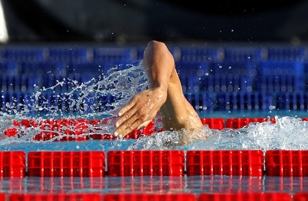 swimmer: Male swimmer swimming crawl in a competition swim pool