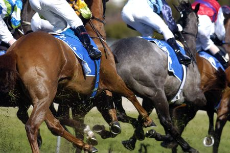 racehorses: Close up of racehorses running.