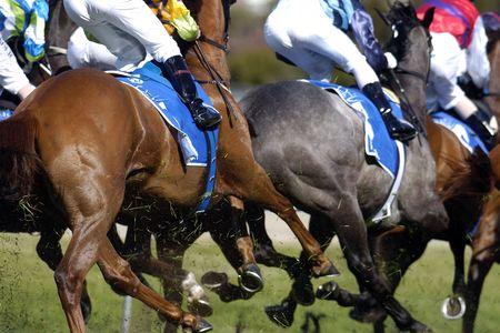 racehorses: Close-up van renpaarden draait.