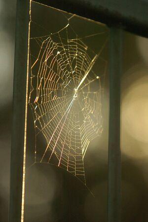 arachnoid: Una ragnatela si siede al mattino la luce del sole ideale una recinzione.