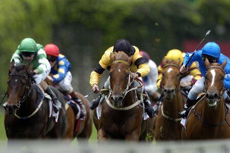 cavallo in corsa: L'azione di un gruppo di cavalli di razza durante una corsa testa-on.