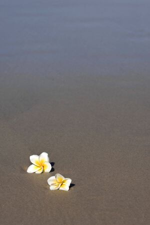 Two frangipani flowers lay on the sand by the oceans edge. photo