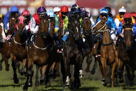 Horses come racing at the camera during a horserace on the grass track. photo