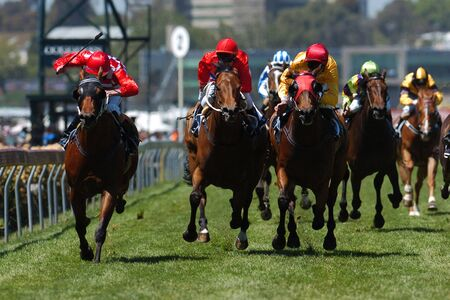 toward: Horses come running toward the camera during a horse race on the grass track. Stock Photo