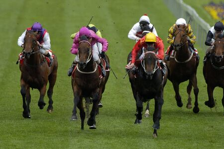 horse race: Horses and jockeys come running toward the camera down the straight of a grass or turf track.