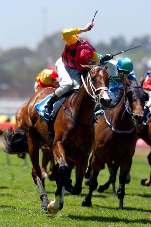 A pack of race horse charging to the line during a race meeting.