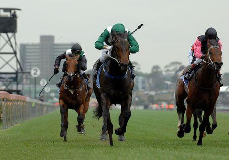 cavallo in corsa: Cavalli di razza a testa verso la finale