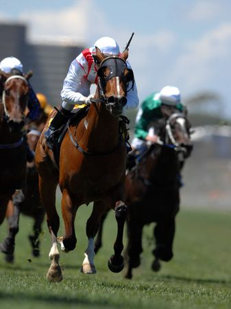 huellas de animales: Un jockey en acci�n durante un caballo en durante la carrera.