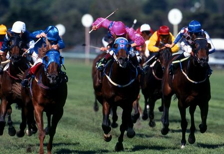 thoroughbred horse: A large pack of race horses charging for the finish line